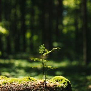 Waldinvestments: Nachfrage steigt