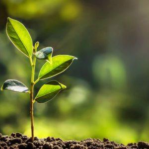 Nachhaltige Fonds
